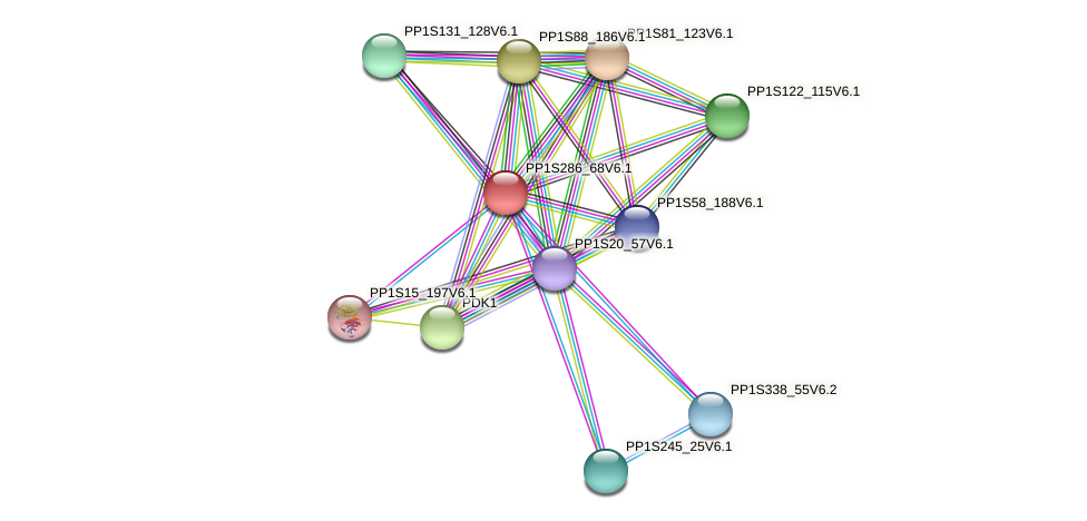 PP1S286_68V6.1 protein (Physcomitrella patens) - STRING interaction network