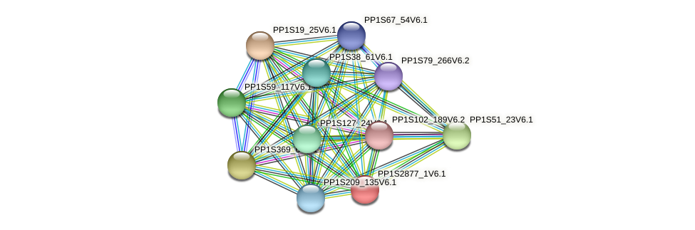 PP1S2877_1V6.1 protein (Physcomitrella patens) - STRING interaction network