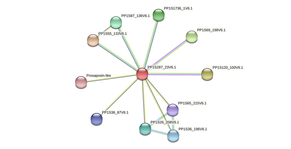 PP1S287_23V6.1 protein (Physcomitrella patens) - STRING interaction network