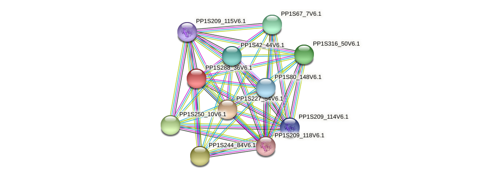 PP1S288_36V6.1 protein (Physcomitrella patens) - STRING interaction network