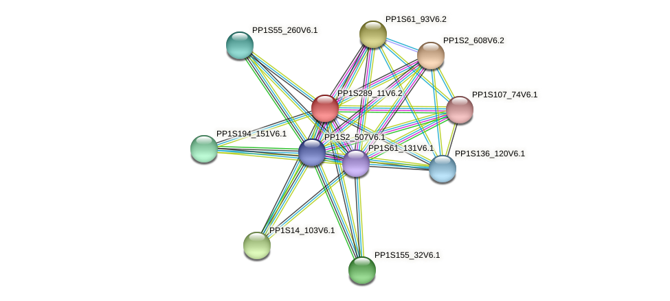 PP1S289_11V6.1 protein (Physcomitrella patens) - STRING interaction network