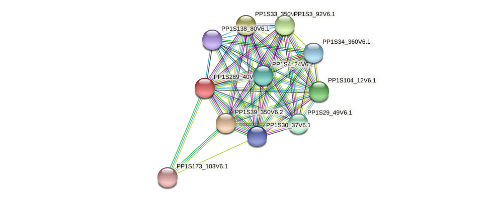 PP1S289_40V6.1 protein (Physcomitrella patens) - STRING interaction network