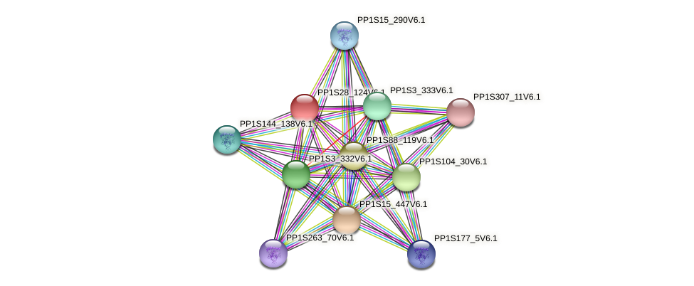 PP1S28_124V6.1 protein (Physcomitrella patens) - STRING interaction network
