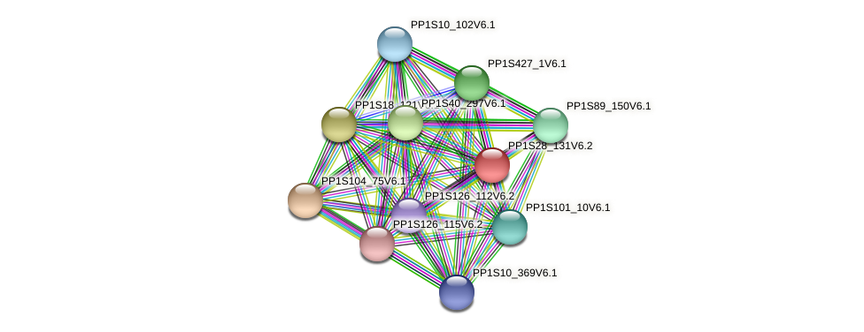 PP1S28_131V6.2 protein (Physcomitrella patens) - STRING interaction network