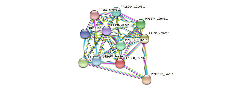 PP1S28_153V6.1 protein (Physcomitrella patens) - STRING interaction network