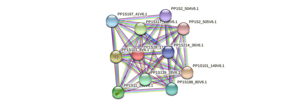 PP1S28_172V6.1 protein (Physcomitrella patens) - STRING interaction network