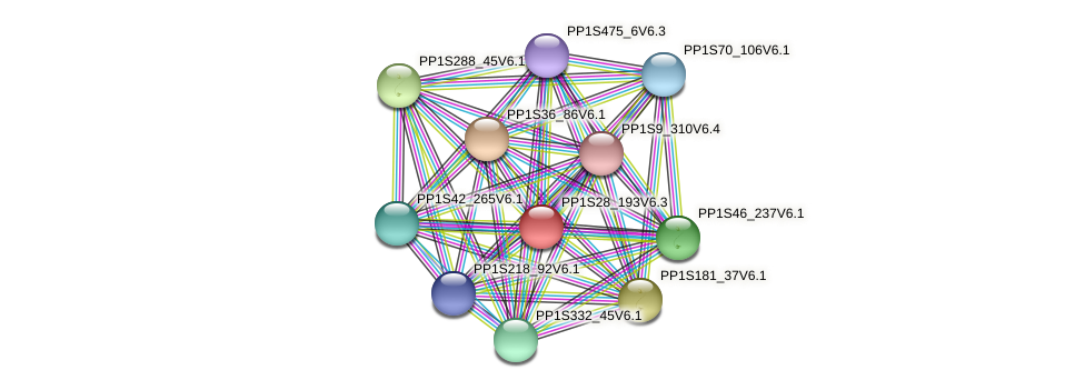 PP1S28_193V6.1 protein (Physcomitrella patens) - STRING interaction network