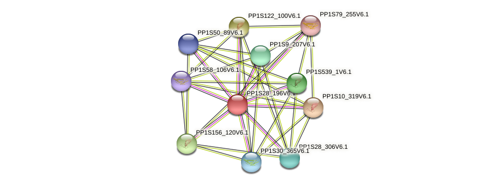 PP1S28_196V6.1 protein (Physcomitrella patens) - STRING interaction network