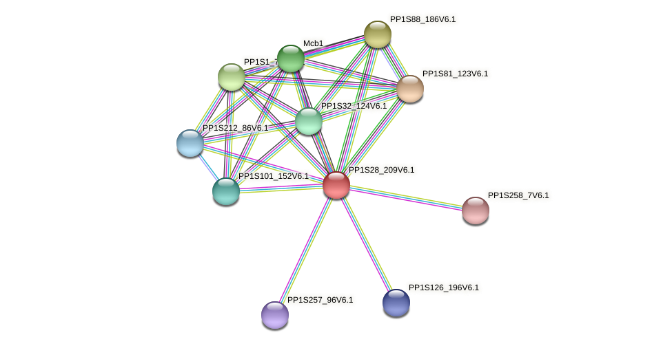 PP1S28_209V6.1 protein (Physcomitrella patens) - STRING interaction network