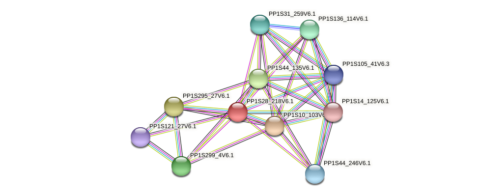 PP1S28_218V6.1 protein (Physcomitrella patens) - STRING interaction network