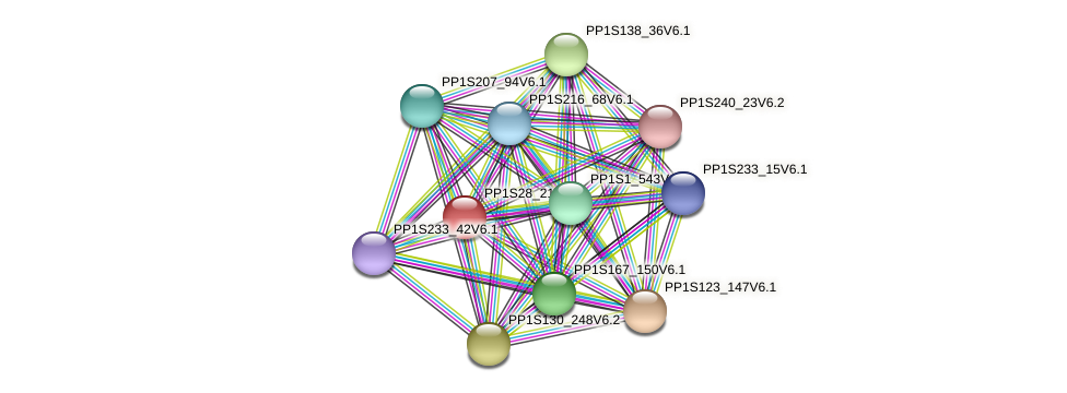 PP1S28_21V6.1 protein (Physcomitrella patens) - STRING interaction network