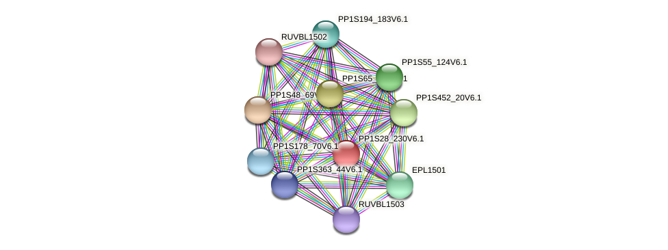 PP1S28_230V6.1 protein (Physcomitrella patens) - STRING interaction network