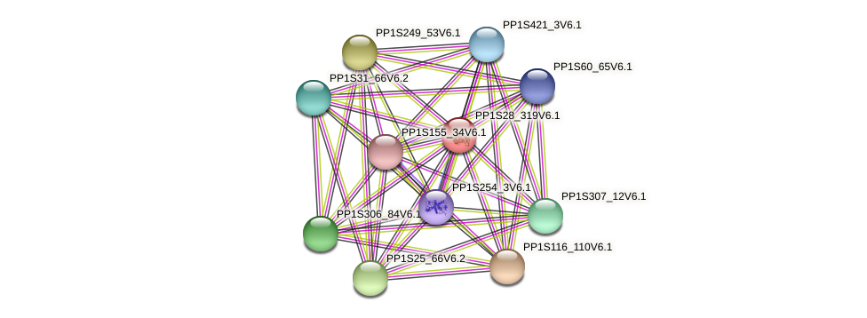 PP1S28_319V6.1 protein (Physcomitrella patens) - STRING interaction network