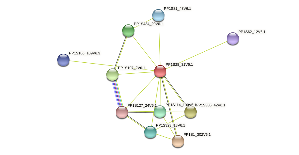 PP1S28_31V6.1 protein (Physcomitrella patens) - STRING interaction network
