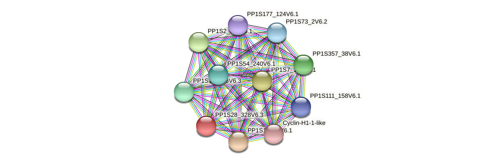PP1S28_328V6.1 protein (Physcomitrella patens) - STRING interaction network