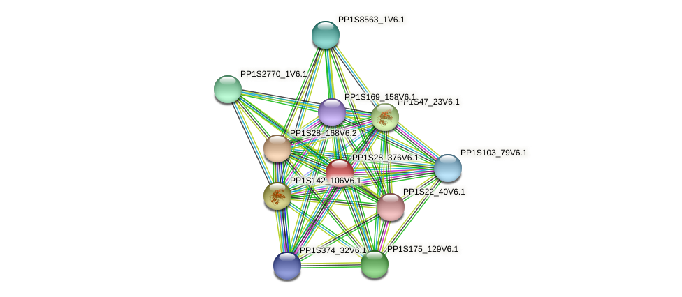 PP1S28_376V6.1 protein (Physcomitrella patens) - STRING interaction network