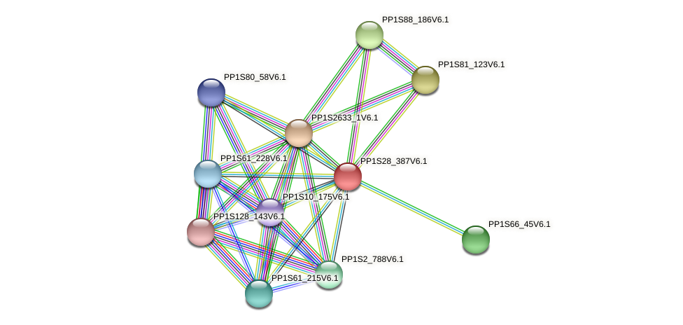 PP1S28_387V6.1 protein (Physcomitrella patens) - STRING interaction network