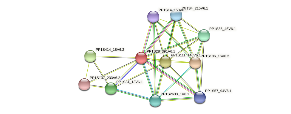 PP1S28_391V6.1 protein (Physcomitrella patens) - STRING interaction network