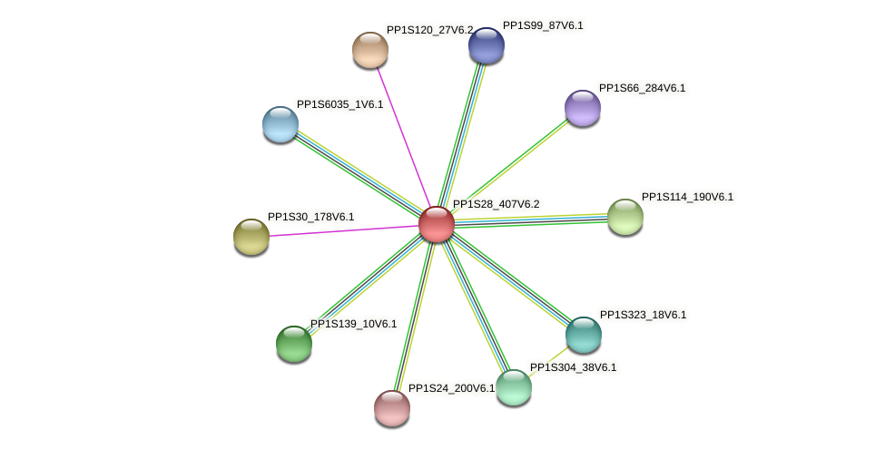 PP1S28_407V6.1 protein (Physcomitrella patens) - STRING interaction network