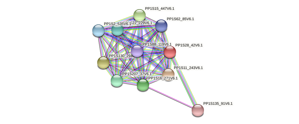 PP1S28_42V6.1 protein (Physcomitrella patens) - STRING interaction network