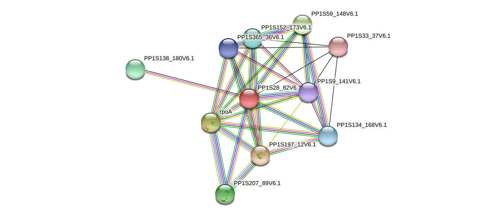 PP1S28_82V6.1 protein (Physcomitrella patens) - STRING interaction network