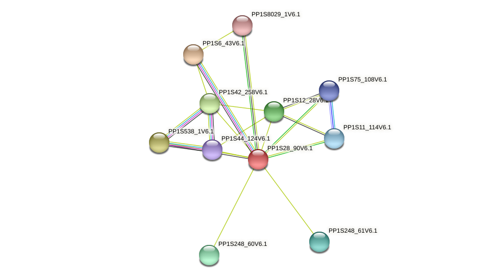 PP1S28_90V6.1 protein (Physcomitrella patens) - STRING interaction network
