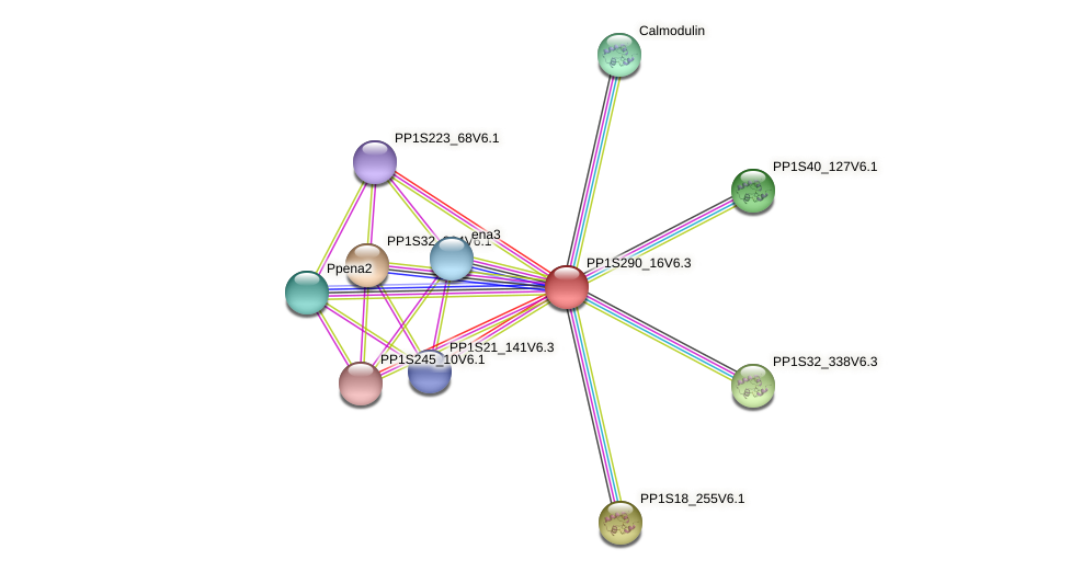 PP1S290_16V6.2 protein (Physcomitrella patens) - STRING interaction network