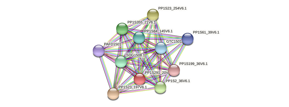 CHR1536 protein (Physcomitrella patens) - STRING interaction network