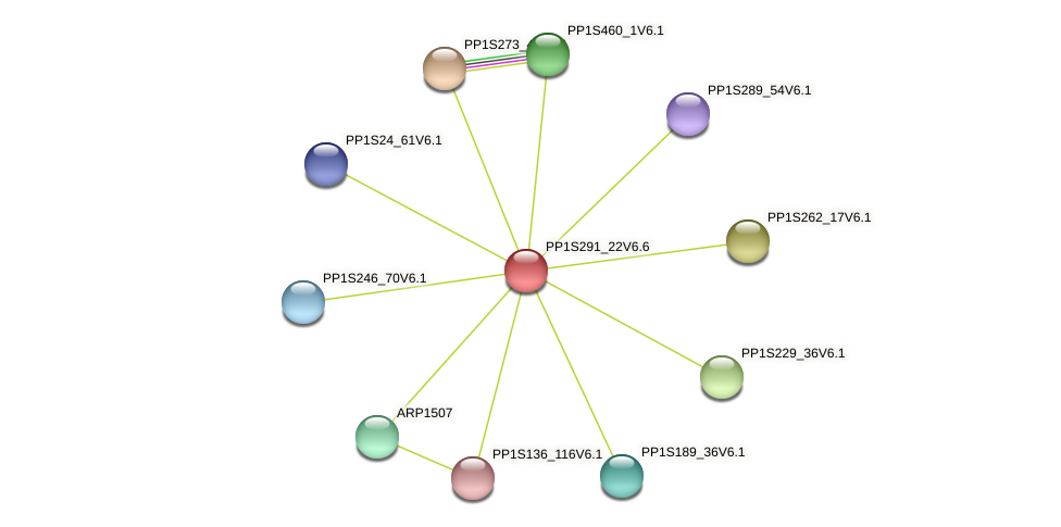 PP1S291_22V6.1 protein (Physcomitrella patens) - STRING interaction network