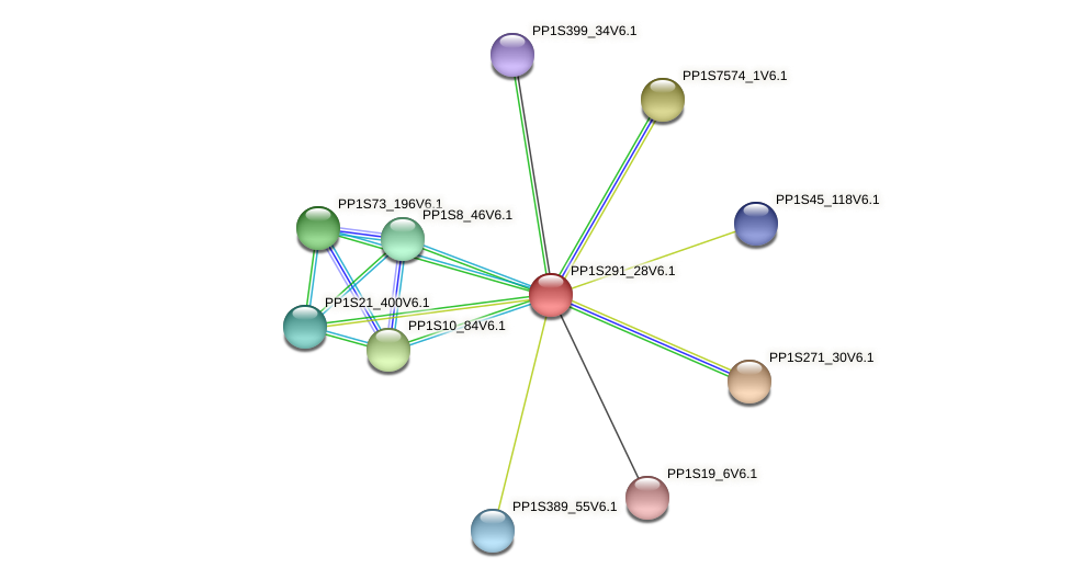 PP1S291_28V6.1 protein (Physcomitrella patens) - STRING interaction network