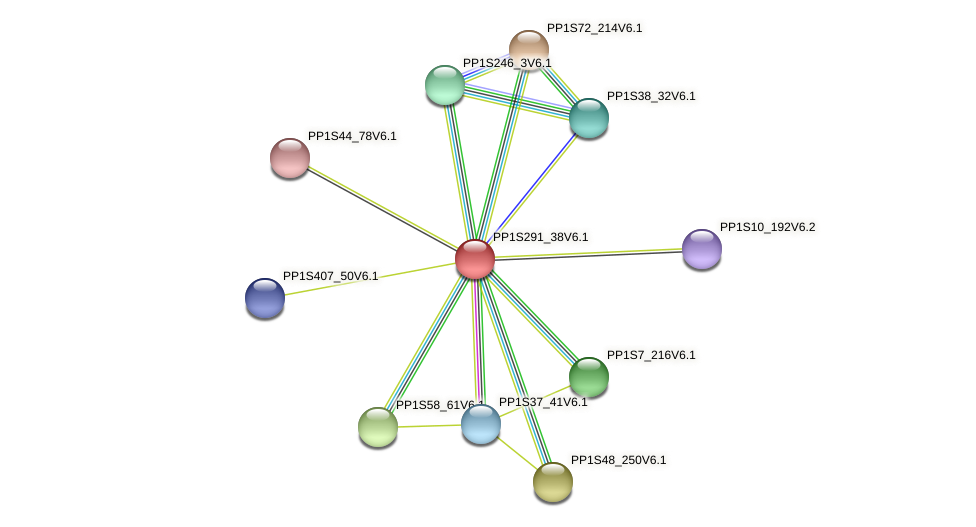 PP1S291_38V6.1 protein (Physcomitrella patens) - STRING interaction network