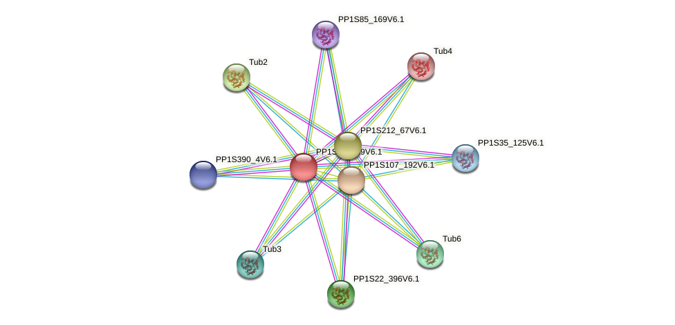 PP1S291_49V6.1 protein (Physcomitrella patens) - STRING interaction network