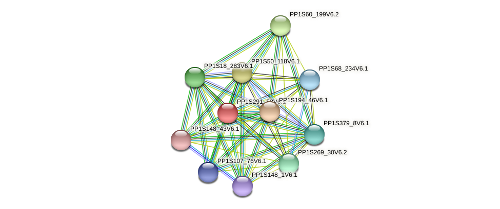 PP1S291_53V6.1 protein (Physcomitrella patens) - STRING interaction network