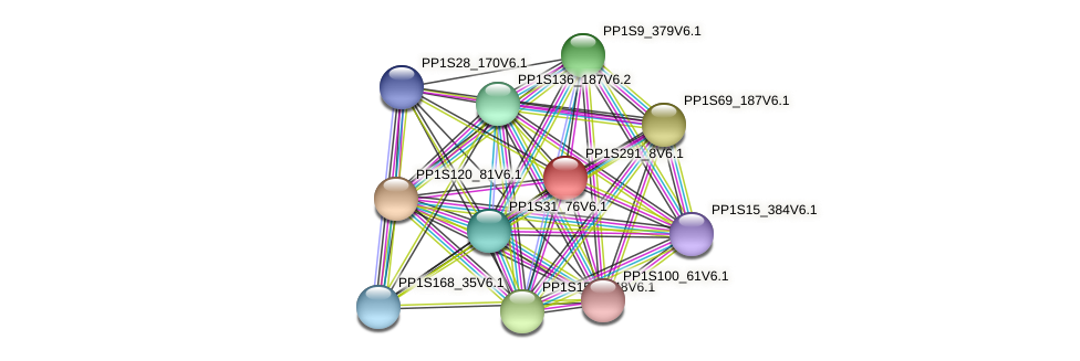 PP1S291_8V6.1 protein (Physcomitrella patens) - STRING interaction network