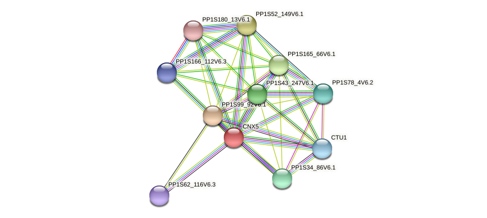 CNX5 protein (Physcomitrella patens) - STRING interaction network