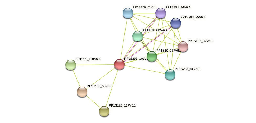 PP1S293_101V6.1 protein (Physcomitrella patens) - STRING interaction network