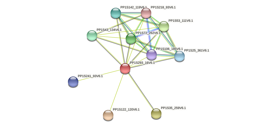 PP1S293_16V6.1 protein (Physcomitrella patens) - STRING interaction network