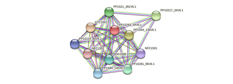 PP1S293_34V6.1 protein (Physcomitrella patens) - STRING interaction network