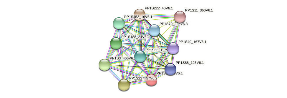 PP1S293_7V6.1 protein (Physcomitrella patens) - STRING interaction network