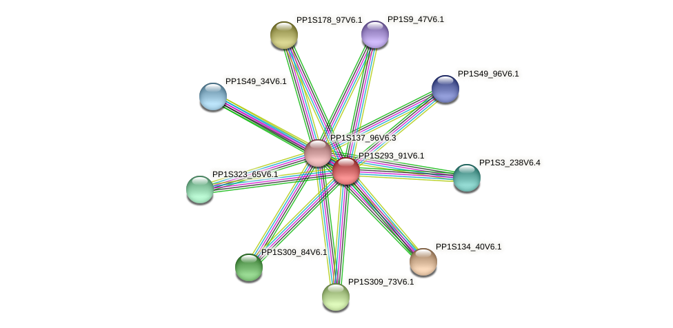 PP1S293_91V6.1 protein (Physcomitrella patens) - STRING interaction network