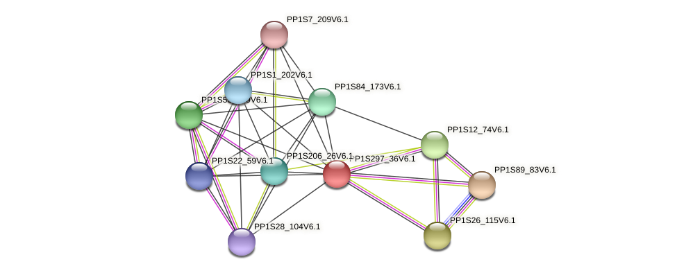 PP1S297_36V6.1 protein (Physcomitrella patens) - STRING interaction network