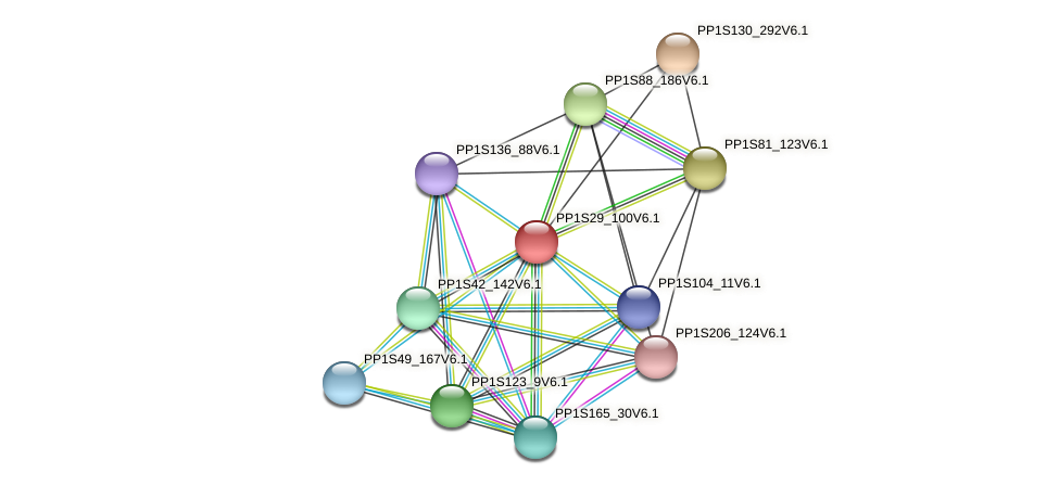 PP1S29_100V6.1 protein (Physcomitrella patens) - STRING interaction network