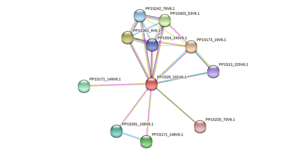 PP1S29_101V6.1 protein (Physcomitrella patens) - STRING interaction network
