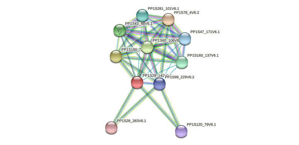 PP1S29_142V6.1 protein (Physcomitrella patens) - STRING interaction network