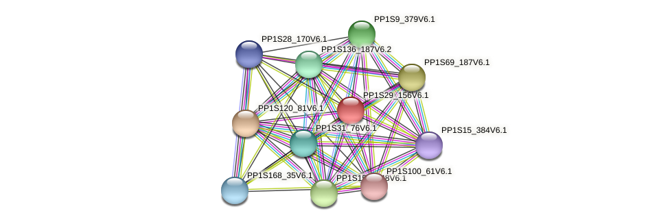 PP1S29_156V6.1 protein (Physcomitrella patens) - STRING interaction network
