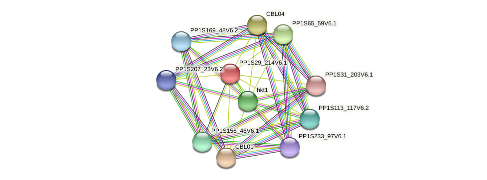 PP1S29_214V6.1 protein (Physcomitrella patens) - STRING interaction network