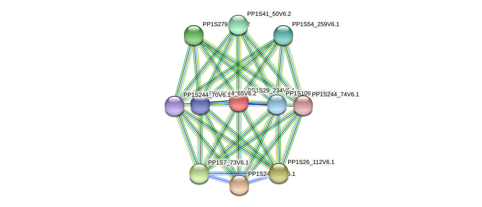PP1S29_234V6.1 protein (Physcomitrella patens) - STRING interaction network