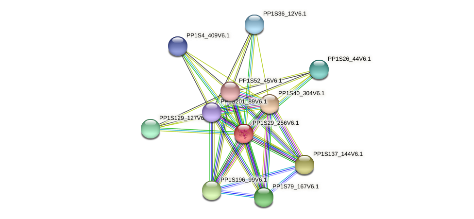 PP1S29_256V6.1 protein (Physcomitrella patens) - STRING interaction network