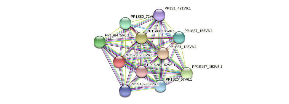 PP1S29_285V6.1 protein (Physcomitrella patens) - STRING interaction network
