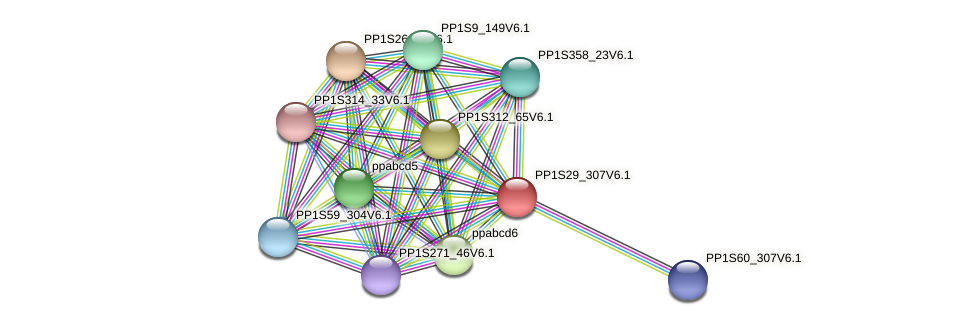 PP1S29_307V6.1 protein (Physcomitrella patens) - STRING interaction network
